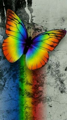 Opal color, color of life, rainbow background, butterfly background, butter Rainbow Wallpaper, Butterfly Wallpaper, Cute Wallpaper Backgrounds, Animal Wallpaper, Pretty Wallpapers, Nature Wallpaper, Colorful Wallpaper, Rainbow Butterfly, Rainbow Art
