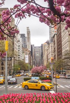 Park Avenue Tulips by Kelly Kopp @kellyrkopp by newyorkcityfeelings.com - The Best Photos and Videos of New York City including the Statue of Liberty Brooklyn Bridge Central Park Empire State Building Chrysler Building and other popular New York places and attractions.