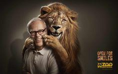 Zoo Bratislava: Lion Campaña publicitaria para que las personas acudan al Zoológico de Bratislava, Eslovaquia.