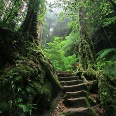 Ancient steps.