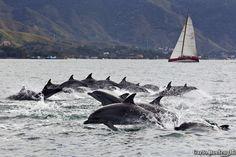 Portal Ilhabela - Capital da Vela: Semana de Vela em Ilhabela - Ano de 2012