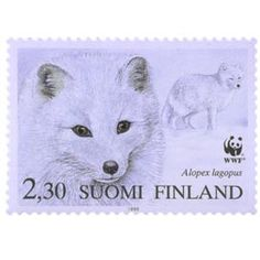 Postage Stamps, Finland, Fox, Paper, Winter, Winter Time, Foxes, Stamps