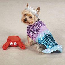 Casual Canine Glim-Mermaid Dog Costumes | PetEdge.com