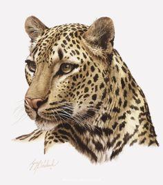 PORTRAITS OF THE BIG CATS 8