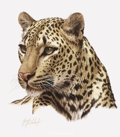 PORTRAITS OF THE BIG CATS 8