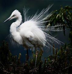White heron by Jaewoon u, via 500px