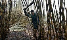 Biofuel bonanza not so sweet for Brazil's sugar cane cutters