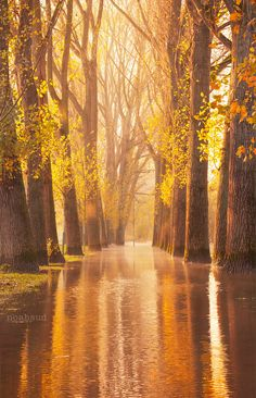 Waltzing Wood ,Cologne Germany