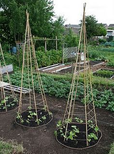 Nice bean tepees that don't take up much space.