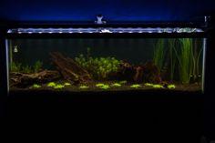 40 Gallon Planted Aquarium Build 14 DayUpdate - Live Fish | Pet Care Corner by PetSolutions - PetSolutions Blog