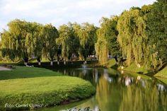 Făgăraș Golf Courses, World, Places