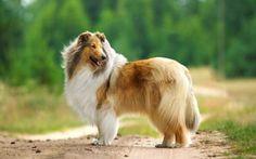 Riconoscere e curare la sensibilità alimentare nel cane In questo articolo affrontiamo il problema delle allergie alimentari nel cane, purtroppo sempre più diffuse. L'aspetto principale è capire se l'allergia è rispetto al cibo o no, questo per pote #cane #alimentazionecane