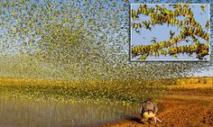British photographer Paul Williams was treated to a mesmerising display, with the murmuration of birds creating breathtaking patterns above a shrinking waterhole in the Australian outback.