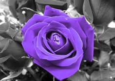 a splash of color pics | PURPLE SPLASH OF COLOR wallpaper