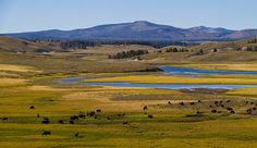 Watch Wildlife in Lamar Valley and Hayden Valley. Yellowstone's huge, wide valleys make excellent habitat for wildlife. For your best chance of spotting them, point your compass toward the Lamar and Hayden.