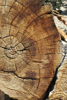 Bishop California, Bristlecone Pine, The Ancient One, Wood Stone, Tree Forest, Tree Print, Trip Advisor, Primitive, Prints