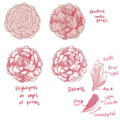 THERE ARE DIFFERENT KINDS OF PEONIES