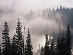 Mountain Mist and Fog in the Coniferous Forest of Mt. Rainier National Park, Washington, USA Photographic Print