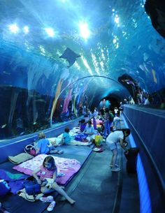 Sleep under the sharks at the world's largest aquarium, right here in America. There's family AND adult-only sleepovers!