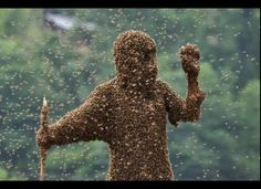 Bee-Wearing Contest In China Won By Wang Dalin.  Contenstants wore nothing but shorts, goggles, and nose plugs, and stood on a scales so that the weight of the bees could be calculated.  Each contestant attracted the bees by locking a queen bee in a small cage and tying it to his body.  The victor? 42-year old Wang Dalin, who added about 52 pounds of bees to his frame