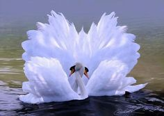 Art Deco inspiratie verliefde zwanen / Art Deco inspiration swans in love