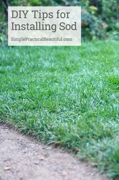 Ideas, advice, and directions on how to lay sod. There's even a video!