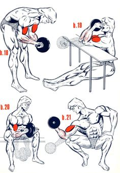 Muscle Building Tips. Gain More Mass With These Weight Training Tips! You can enjoy yourself and see the progress of an effective workout routine. Weight Training Workouts, Gym Workout Tips, Fitness Workouts, At Home Workouts, Biceps And Triceps, Dumbbell Workout, Workout Posters, Bodybuilding Workouts, Men's Bodybuilding