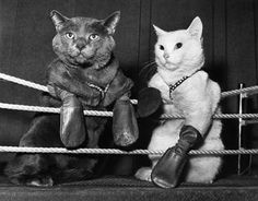64 Best Cat fights images in 2019 | Gatos, Cut animals, Cute funny ...