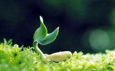 Plant Growing Nature Picture Hd Wallpaper Background