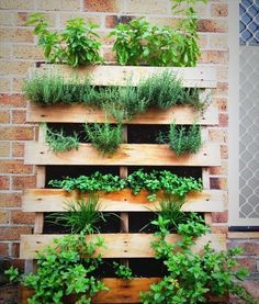Simple Pallet Herb Garden. Planning on basil, thyme, rosemary, oregano, chives and mint, will also add sage and parsley.