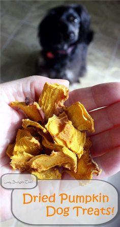 How to make dried pumpkin dog treats. Allergy free dog treat recipe!