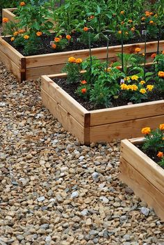 raised garden beds....look at how they did herbs!! Very cool!