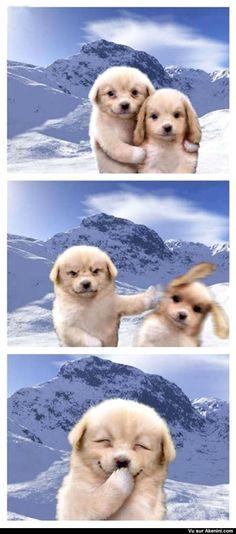 Deux chiens qui se prennent en photo - Funny dogs pictures