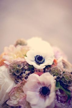 mmmm french anemones. Possibly my favorite flower alongside the pink peony