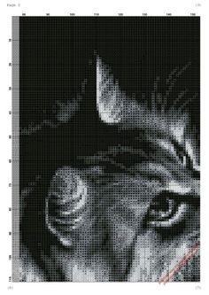 Chat gris/noir grille 2