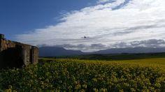 Canola fields, Swellendam Canola Field, South Africa, Fields, African, Adventure, Mountains, World, Nature, Travel
