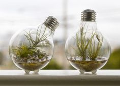 Need to dispose of old light bulbs, make a #terrarium instead! This fun #DIYproject will look great at home or in the office!