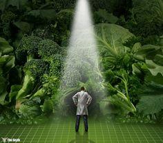Bitkiler Acıyı ve Yendiklerini Hissediyor