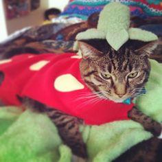 cats-halloween-costumes-04