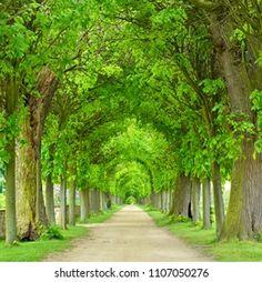 Trees Tunnel Images, Stock Photos & Vectors | Shutterstock Garden Trees, Trees To Plant, Tree Planting, Tree Tunnel, Landscape Walls, Landscape Paintings, Tree Line, Tree Photography, Photo Tree
