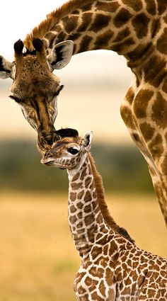 Parker loves giraffes, and we love you Parker!!
