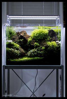 Superb 1,268 Likes, 9 Comments   Green Aqua (@greenaquashop) On Instagram: U201cADA  Cube Garden 60H Set. With Black Lava, Hemianthus Glomeratus, Riccardia, A U2026