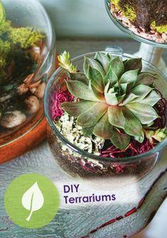 Make terrariums galore to decorate your home! – DIY Terrariums