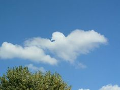 Image detail for -Clouds That Look Like Something Else ~ Now That's Nifty