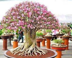 Bonsai Tree Grand Expo