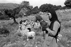Young woman in the fields of Mallia spinning while guarding her flock of sheep. Old Photos, Vintage Photos, Zorba The Greek, Greece Photography, Vintage Photography, Old Greek, Crete Island, Athens Greece, Crete Greece