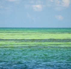 Florida Keys --- oh so beautiful!!  Especially when sitting in Mpls on a cold day.  ;)