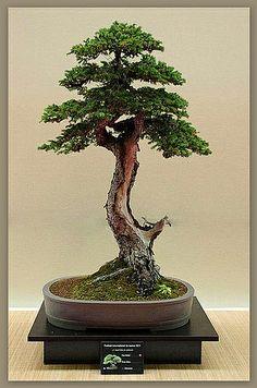 .bonsai
