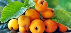 11 Amazing Benefits and Uses Of Loquat