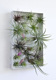 """The variety of textures, colors, and forms of tillandsia air plants allows them to be used the way a painter does paint. The frame allows them to be rearranged at will. Airplantframes bring out everyone's inner """"air plant artist."""""""